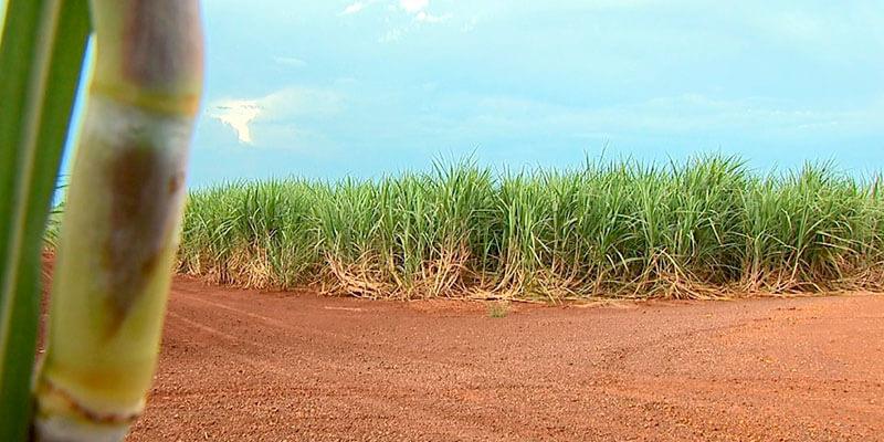 excell-bombas-excesso-de-acucar-no-mercado-internacional-projeta-safra-com-alta-de-etanol-e-preco-menor-nas-bombas-(2)