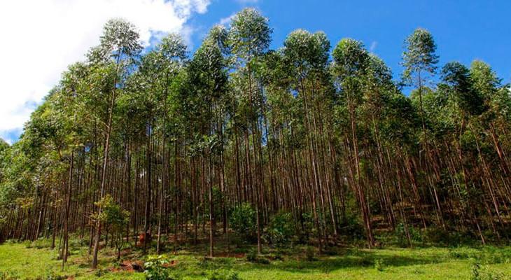 excell-bombas-cultivo-de-florestas-para-fins-industriais-diminui-pressao-sobre-matas-nativas